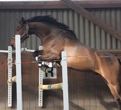 liebes pferd zu verkaufen